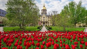 16 Red Tulips Dome